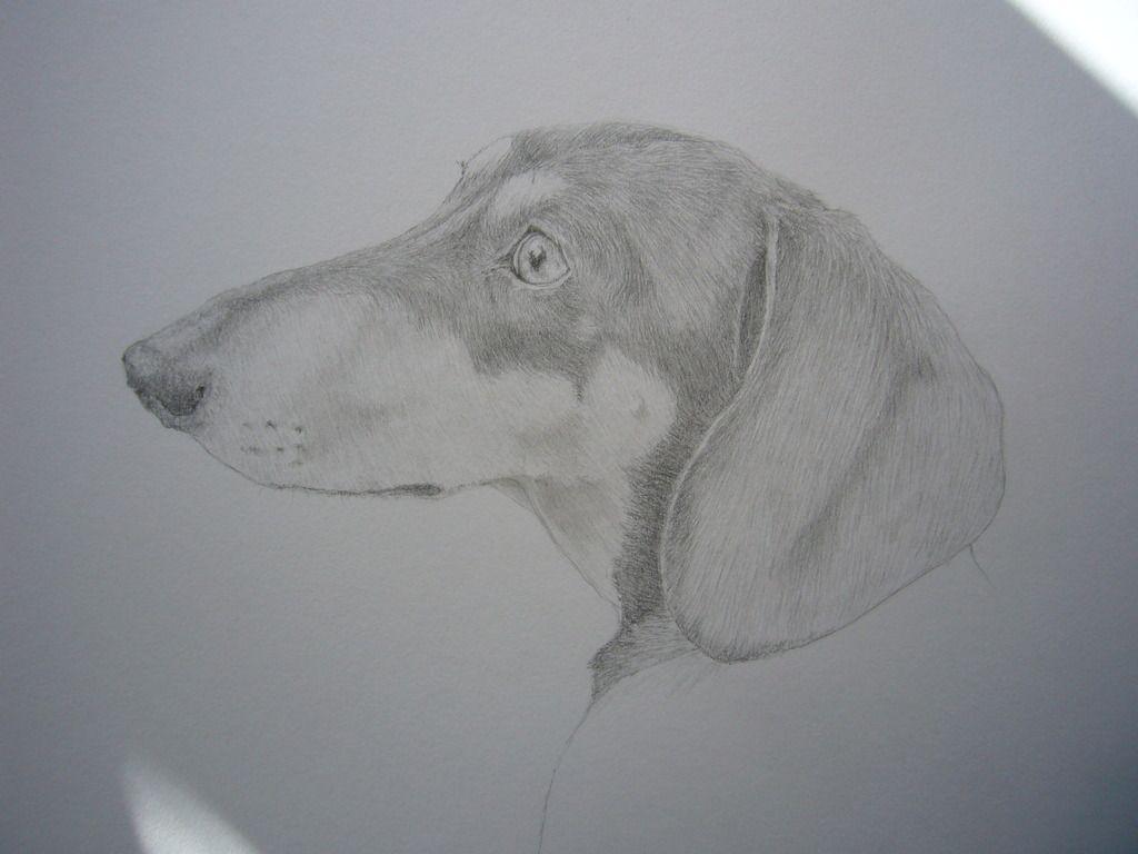 Sketches by Sally - Page 3 WILFIE2_zpsufaxq9wf