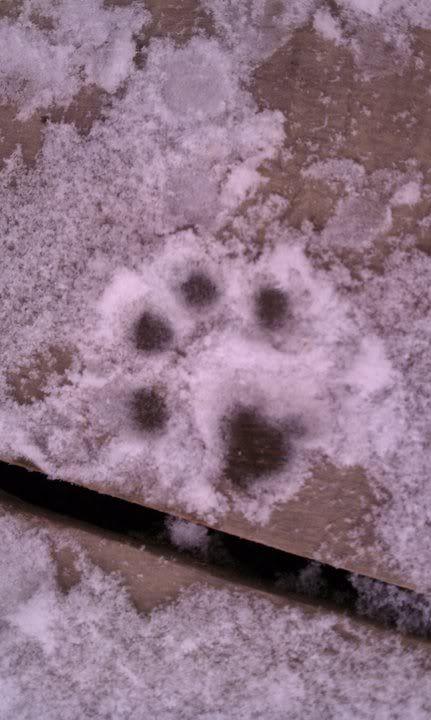 Mira & Icon's 1st Snow ~~~  162612_471654088123_733943123_5857012_3577078_n