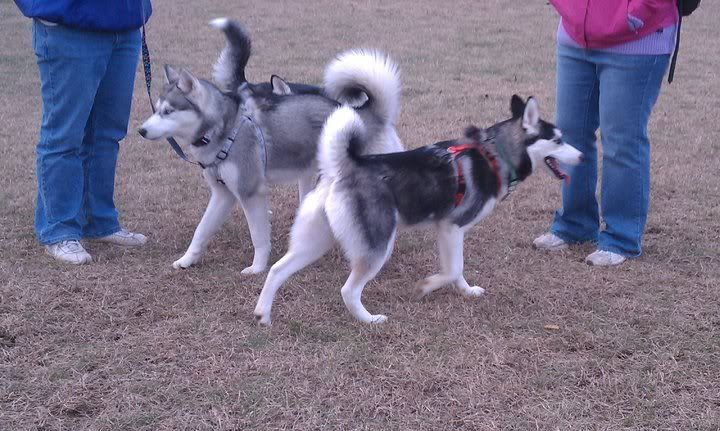 Dog park 12-7 65697_472191868123_733943123_5863544_3789615_n