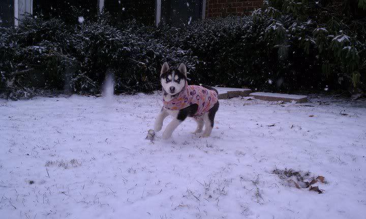 Mira & Icon's 1st Snow ~~~  162975_471629053123_733943123_5856446_8259496_n