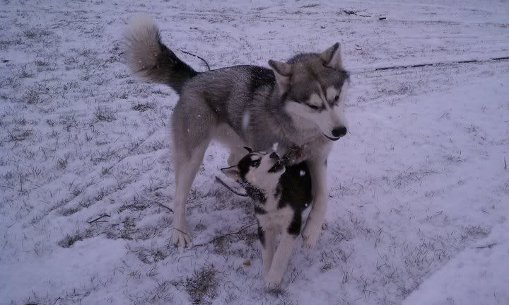 Mira & Icon's 1st Snow ~~~  163091_471635553123_733943123_5856635_601003_n