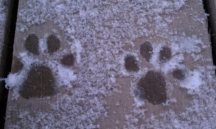 Mira & Icon's 1st Snow ~~~  63600_471654268123_733943123_5857017_475652_n