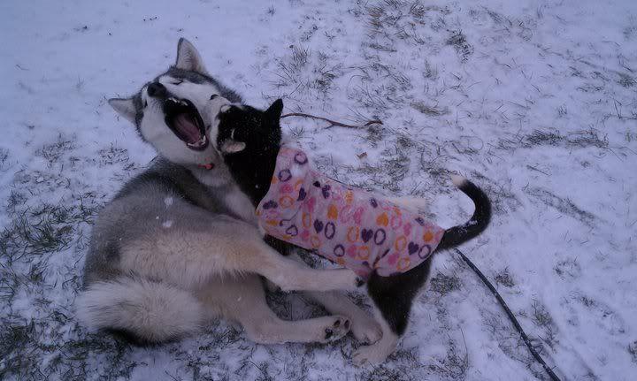 Mira & Icon's 1st Snow ~~~  68225_471631158123_733943123_5856507_6451542_n