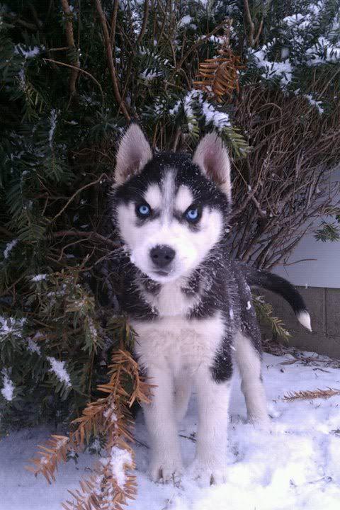 Mira & Icon's 1st Snow ~~~  69513_471628143123_733943123_5856417_2987381_n