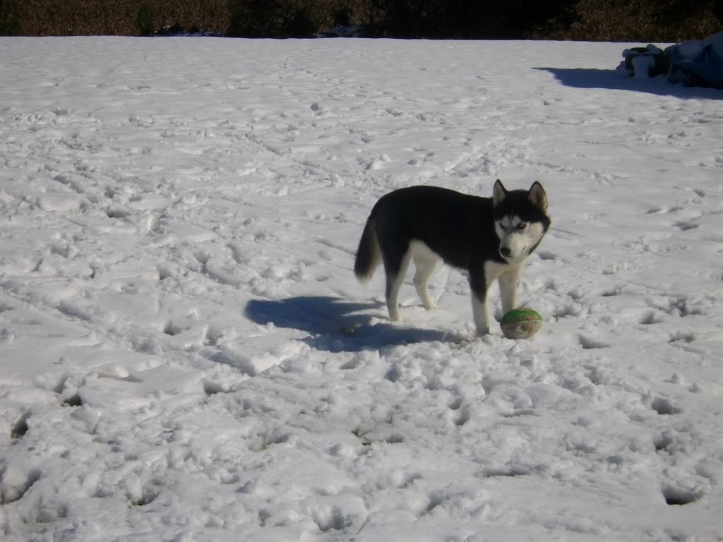 Some updated Pixx of Mira & Icon  Snow2011048
