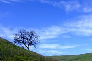 Whisper Wind Hills