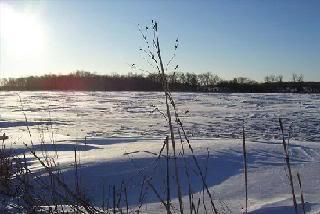 Shimmering Snow Fields