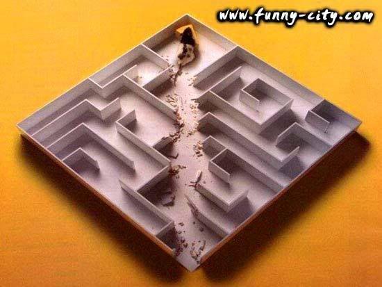 Hình zui zui - Page 2 Maze