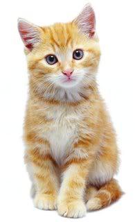 Kitten.jpg Kitten image by BridgetSarah