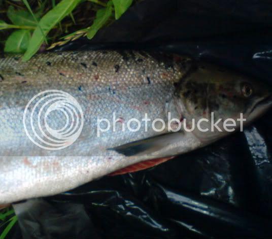 Poaching bastads DSC00181-1