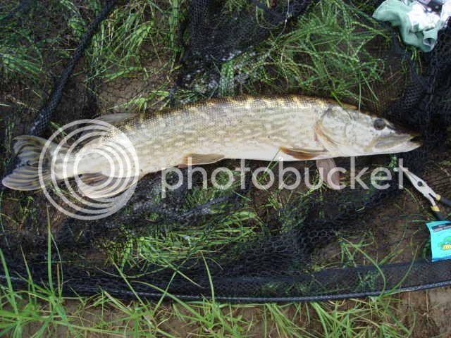 a few of my fish captures DSC02317