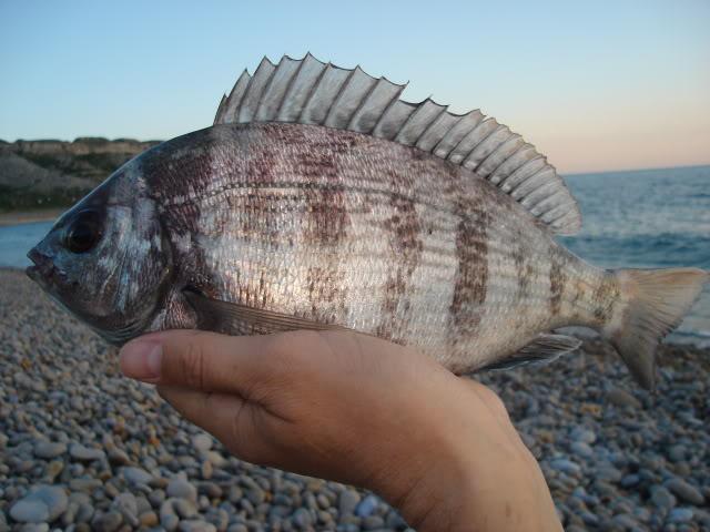 Rods for Black Bream Fishing DSC04155