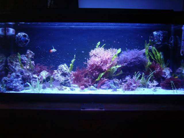 I AM A SALT TANK OWNER AS OF TODAY!!!! - Page 2 029-1