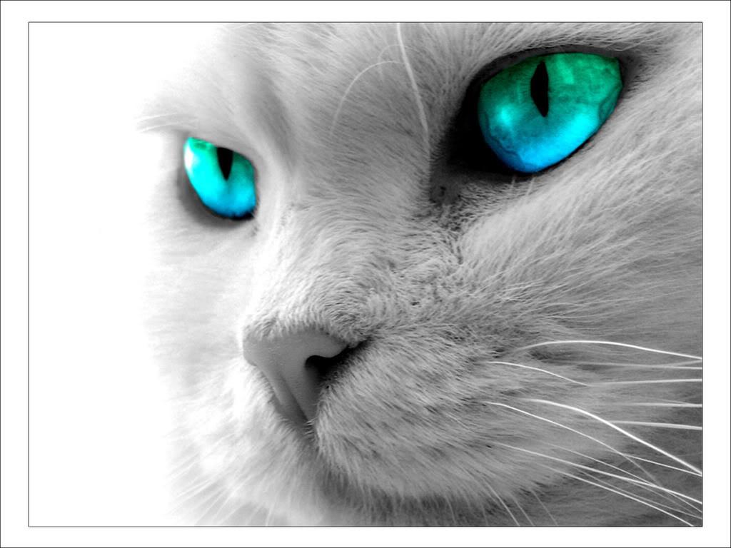Kits in ShadowClan - Page 2 Cat-blue-eyes