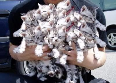 Animals Kittens