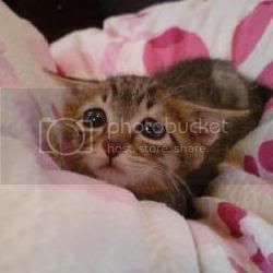Earthquakes in Chile Sad_kitten