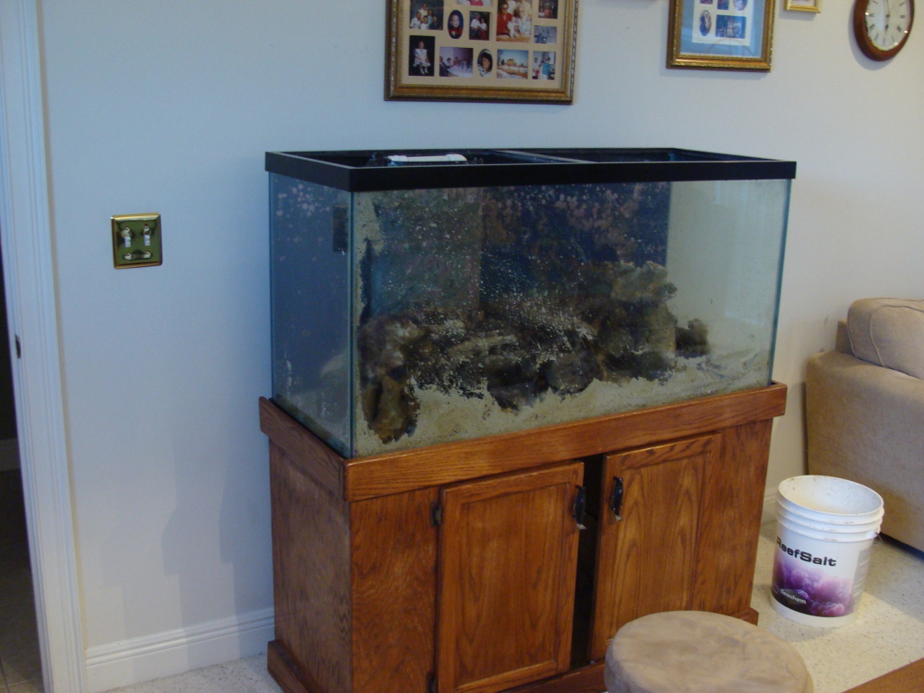 Nick's 90 gallon aggressive reef tank DSC09014