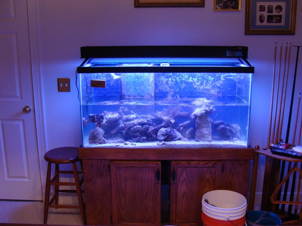 Nick's 90 gallon aggressive reef tank DSC09024