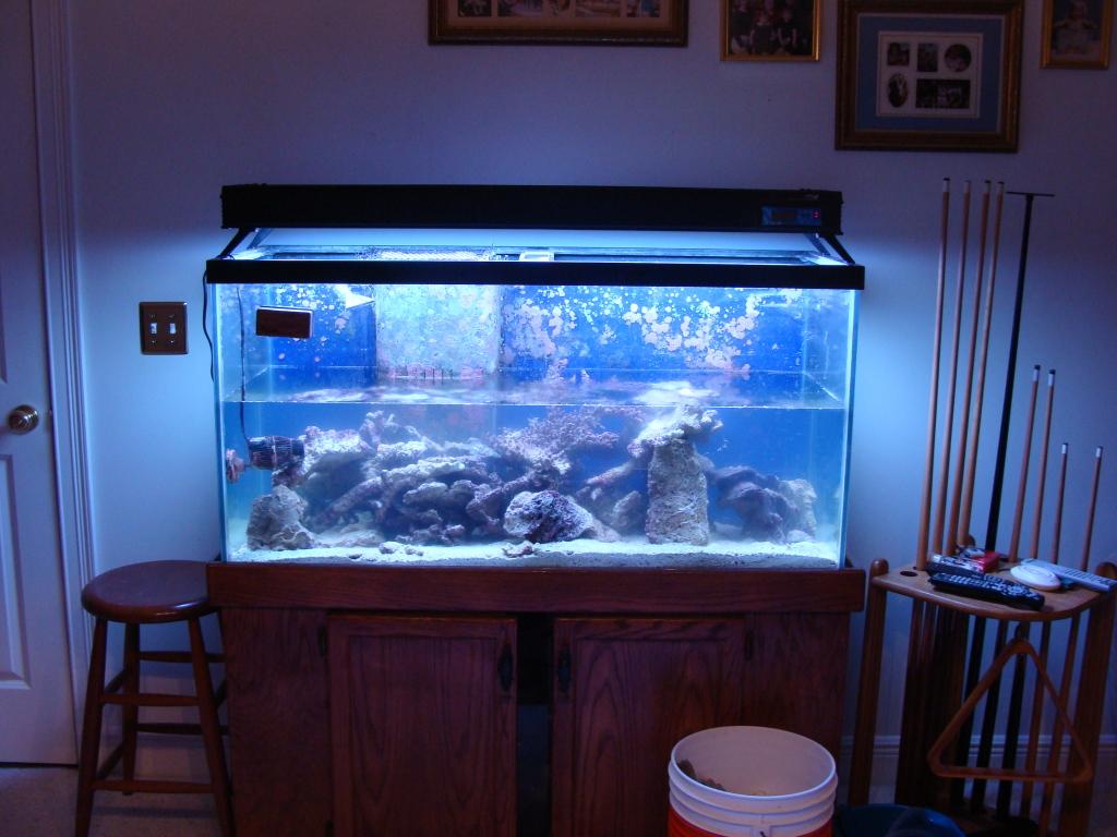 Nick's 90 gallon aggressive reef tank DSC09025