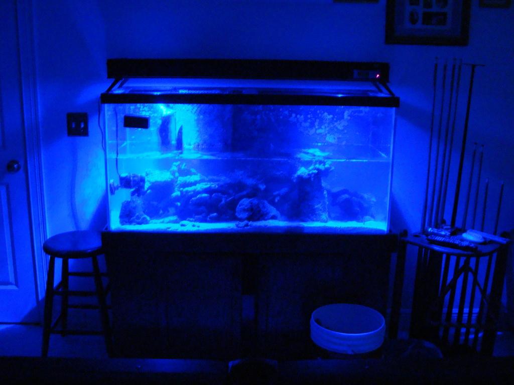 Nick's 90 gallon aggressive reef tank DSC09028