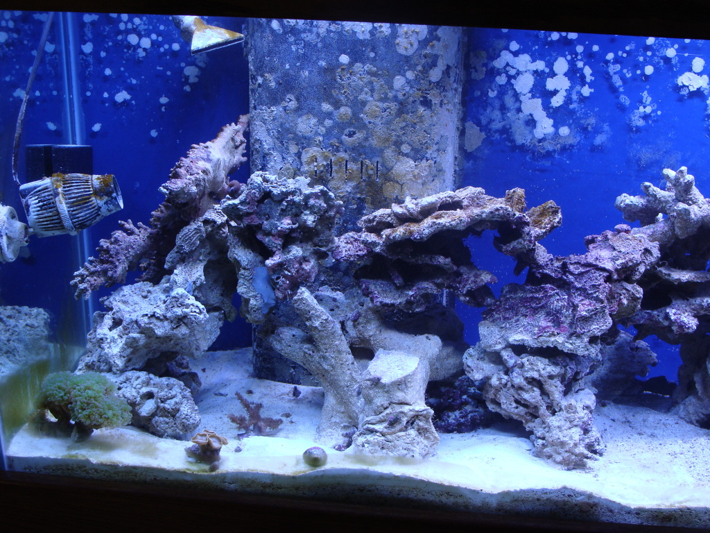 Nick's 90 gallon aggressive reef tank DSC09097