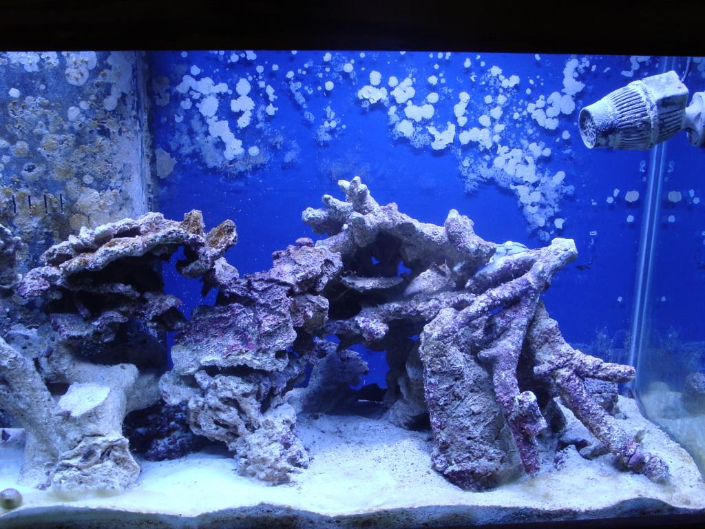 Nick's 90 gallon aggressive reef tank DSC09098