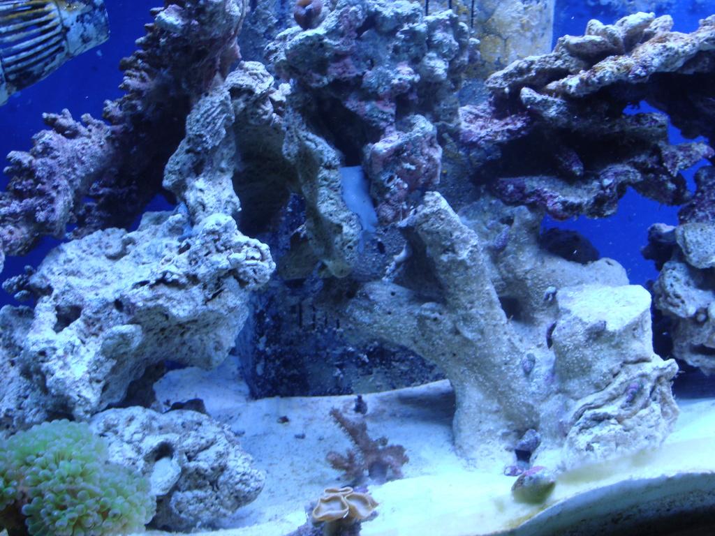 Nick's 90 gallon aggressive reef tank DSC09100