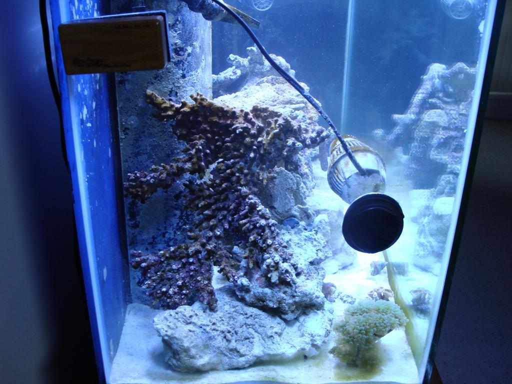Nick's 90 gallon aggressive reef tank DSC09101