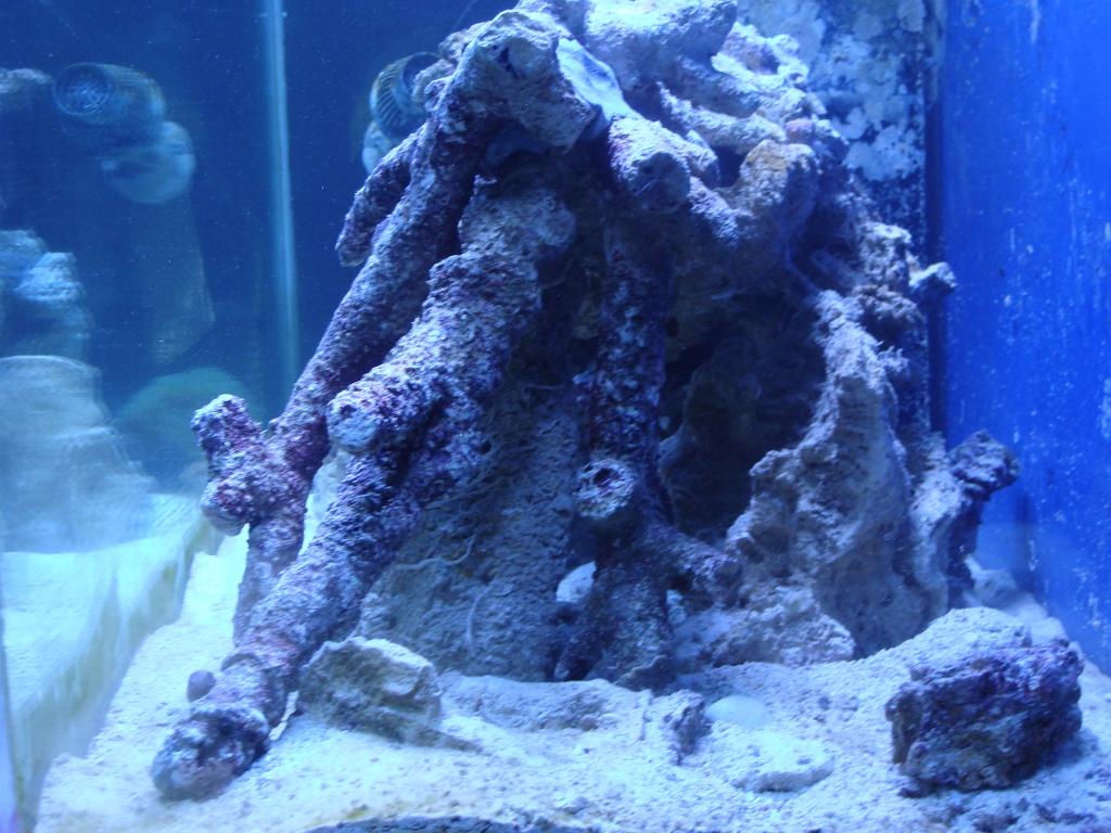Nick's 90 gallon aggressive reef tank DSC09102