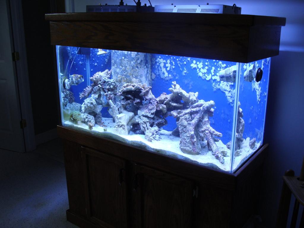 Nick's 90 gallon aggressive reef tank DSC09103