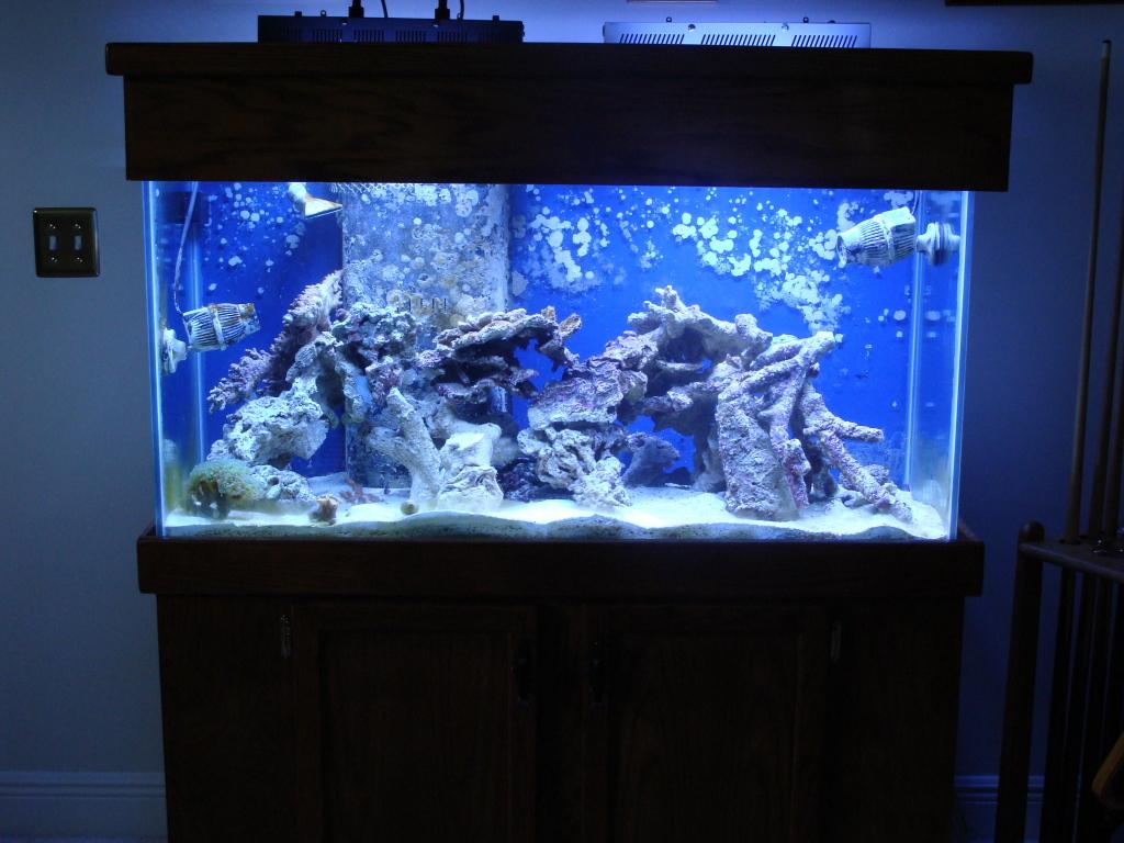Nick's 90 gallon aggressive reef tank DSC09105