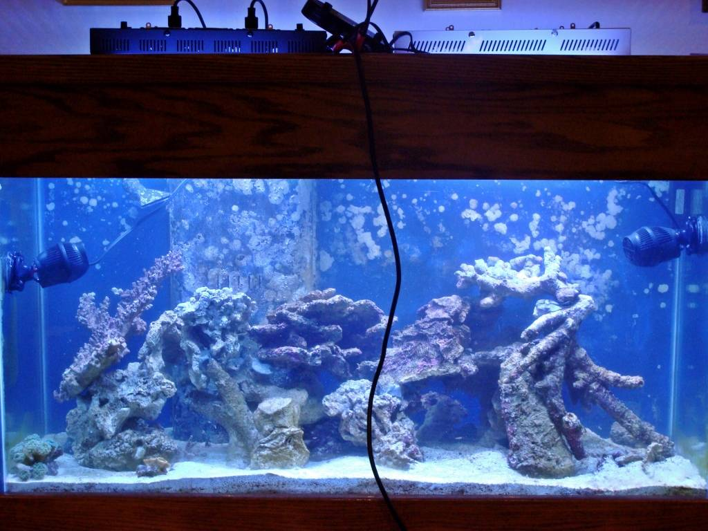 Nick's 90 gallon aggressive reef tank - Page 2 DSC09150