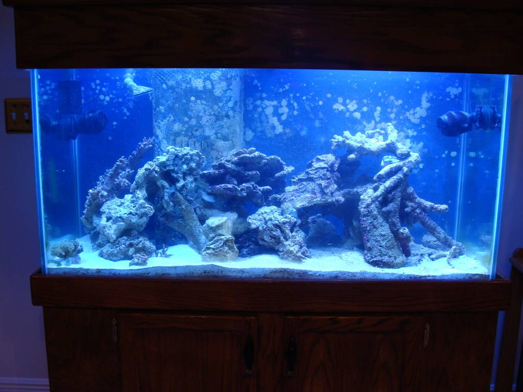 Nick's 90 gallon aggressive reef tank - Page 2 DSC09157
