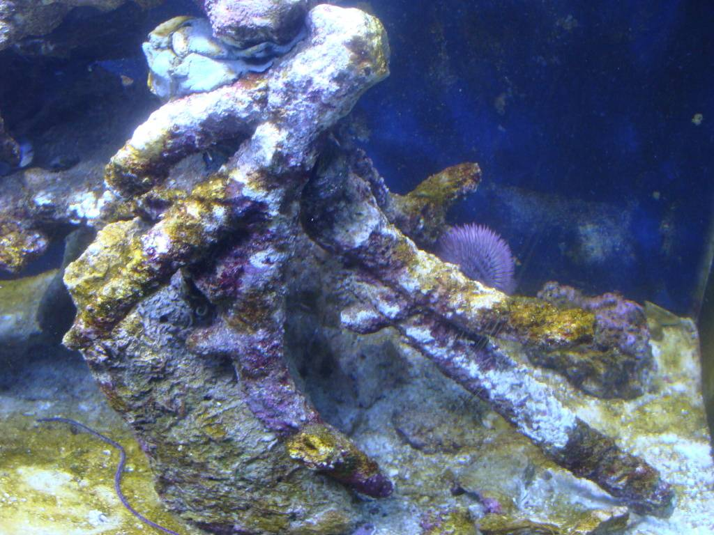 Nick's 90 gallon aggressive reef tank - Page 2 DSC09165