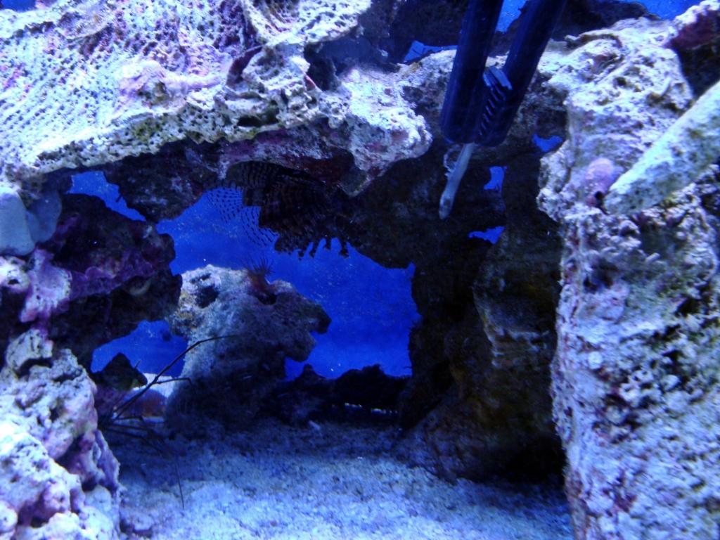 Nick's 90 gallon aggressive reef tank - Page 3 DSC09275