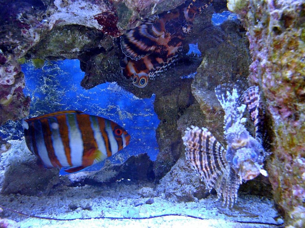 Nick's 90 gallon aggressive reef tank - Page 4 DSC09325_zps6899185d