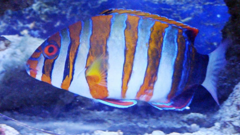 Nick's 90 gallon aggressive reef tank - Page 4 DSC09338_zps8ec20367