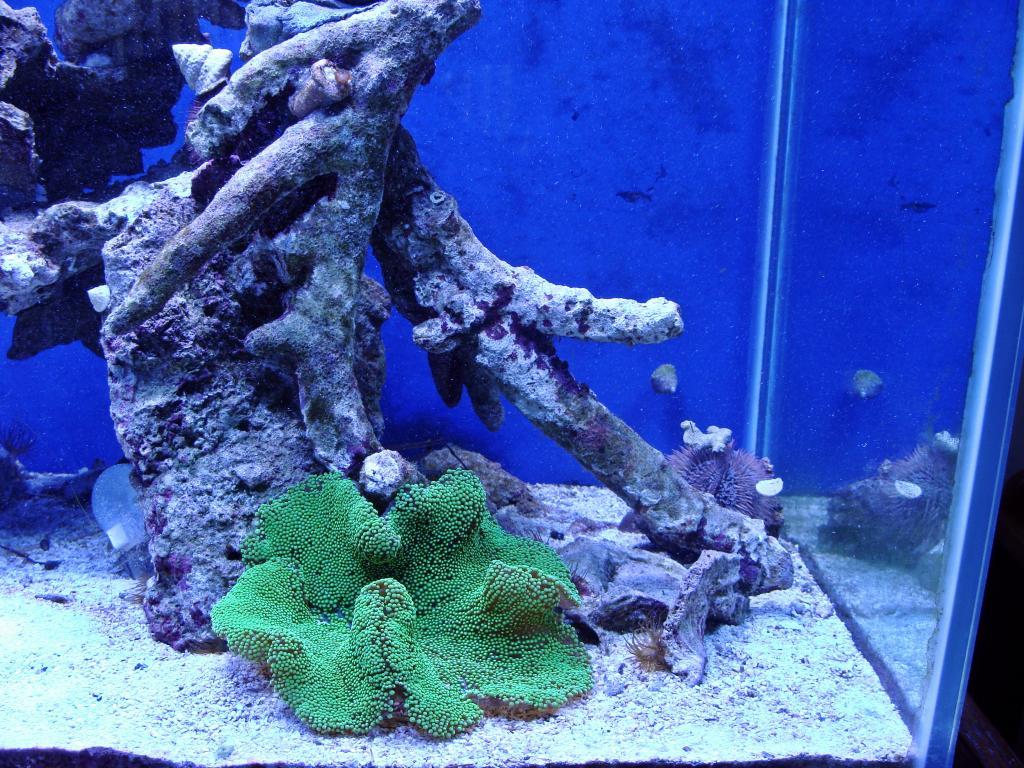Nick's 90 gallon aggressive reef tank - Page 5 DSC09345_zpseef021ab