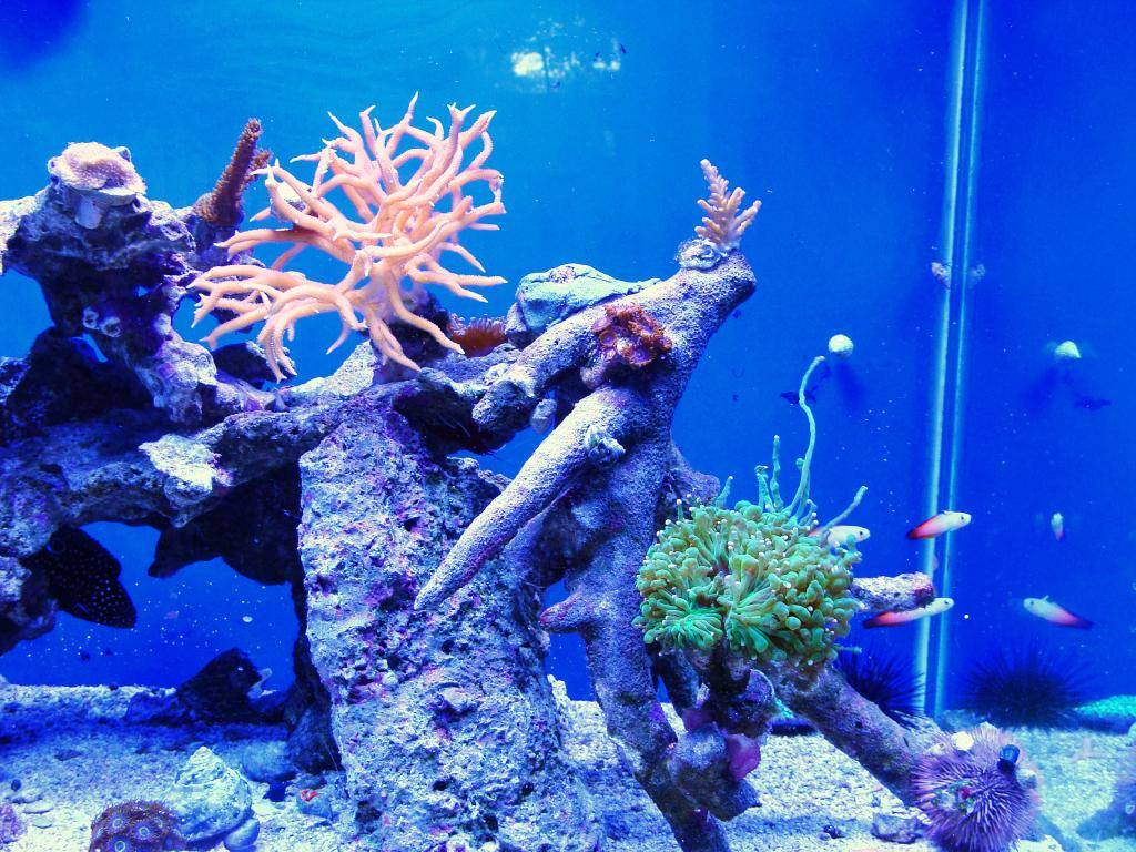 Nick's 90 gallon aggressive reef tank - Page 6 DSC09727_zpsdea9c9be