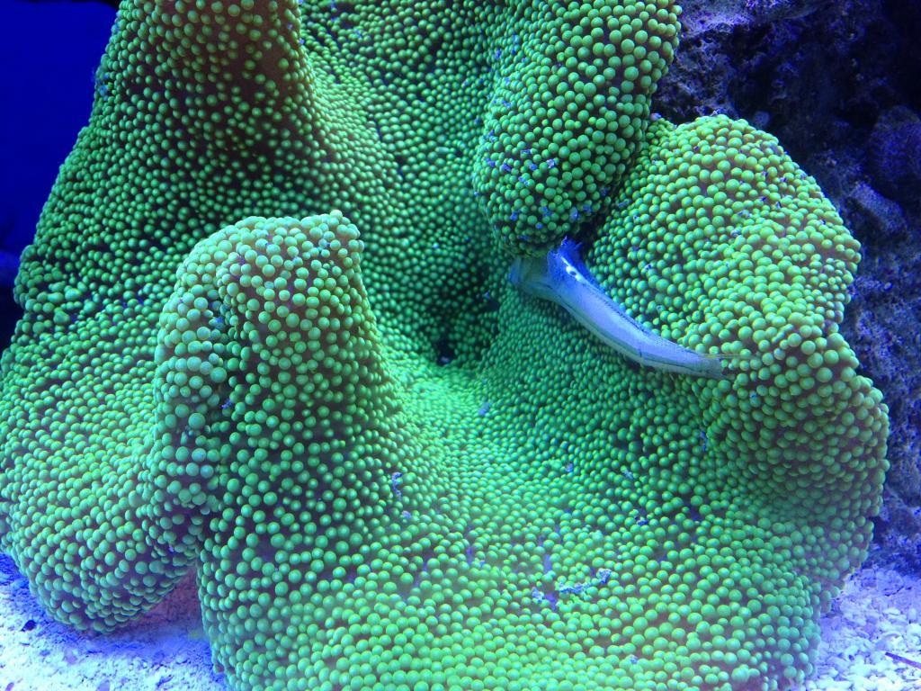 Nick's 90 gallon aggressive reef tank - Page 5 Photo1
