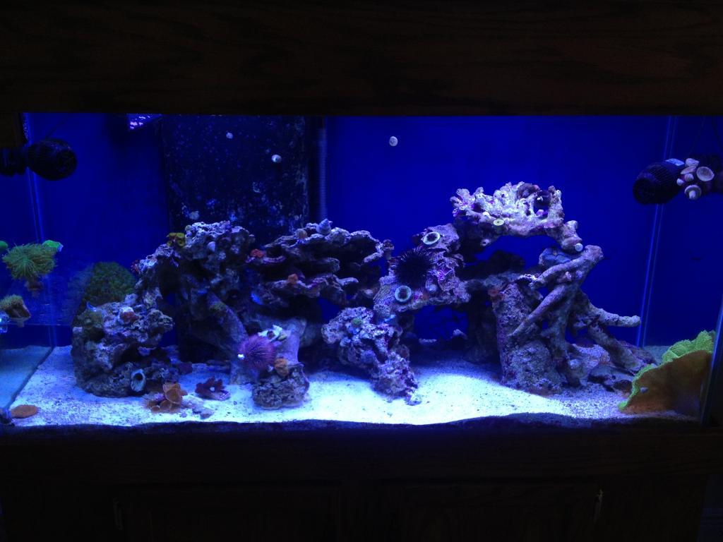 Nick's 90 gallon aggressive reef tank - Page 5 Photo6