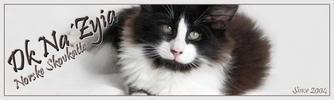 Et halsbånd på en kat kan være en dødsfælde 2ba4aac1-35a5-4f5c-abfc-4f05ef73b43