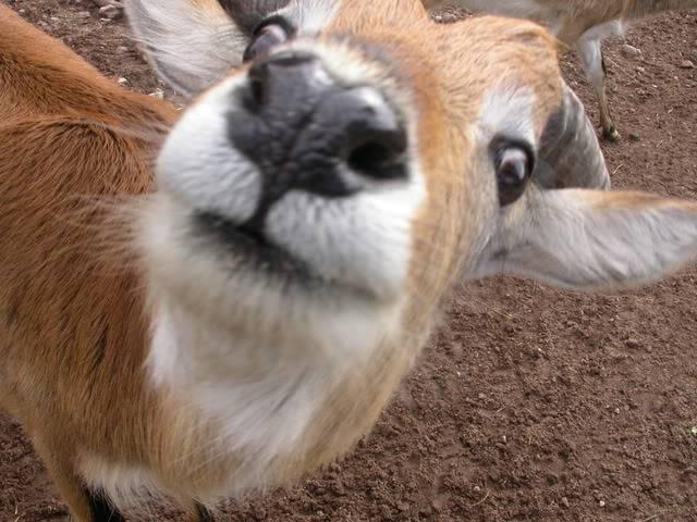 Belles photos d'animaux c'est ici !  - Page 3 DSCN3121