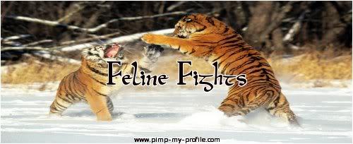 Feline Fight