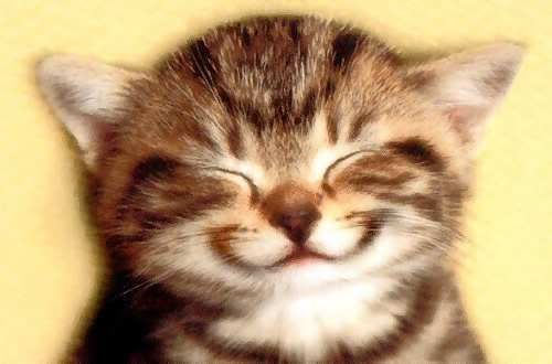 cat-smile1.jpg funny cat image by nikkihateyou1