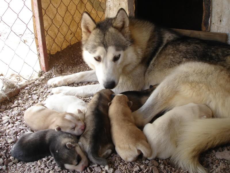 Dragonfliez box of pups. - Page 2 DSC05992