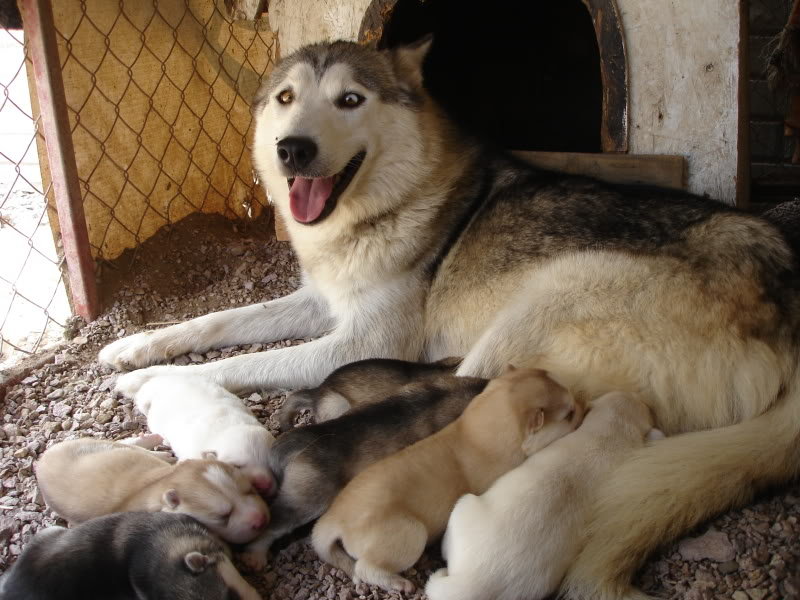 Dragonfliez box of pups. - Page 2 DSC05994