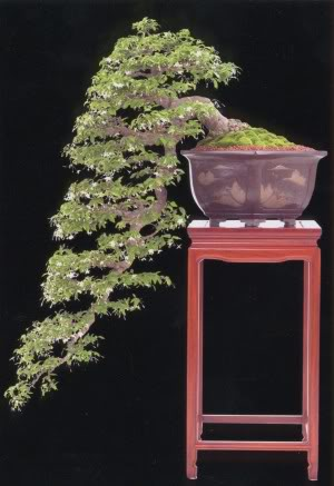 KIỂU DÁNG BONSAI Do
