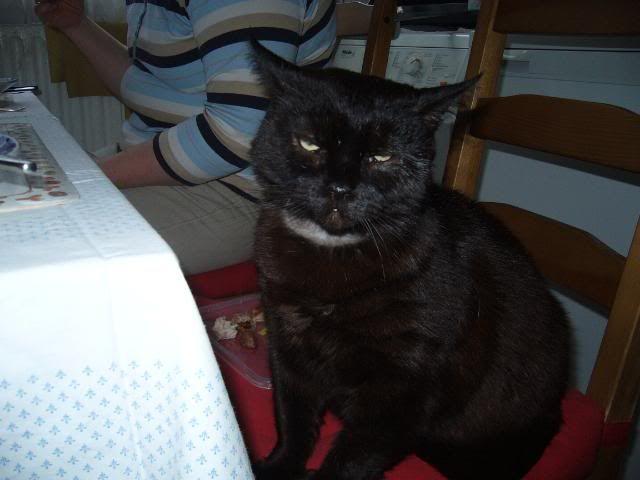 Zwarte kat Niels P1030756