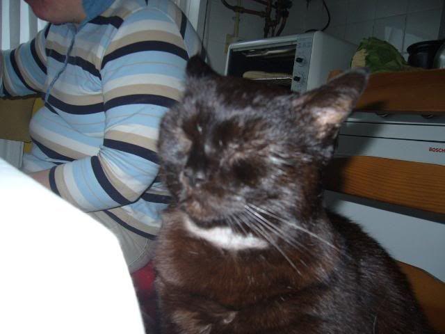 Zwarte kat Niels P1030758